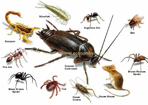 pests1
